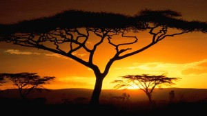 African sunrise or sunset with trees in the foreground